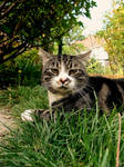 punky cat