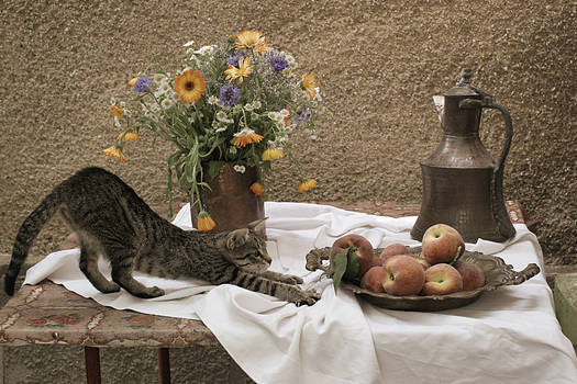 Summer composition with cat
