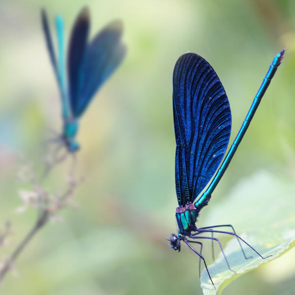 composition with damselflies