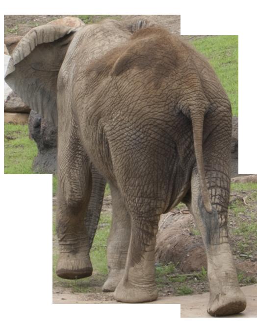صور فيله صور فيله للتصميم صور فيله png صور فيله stock_png_elephant_by_earthymoon-d4dadl6.png