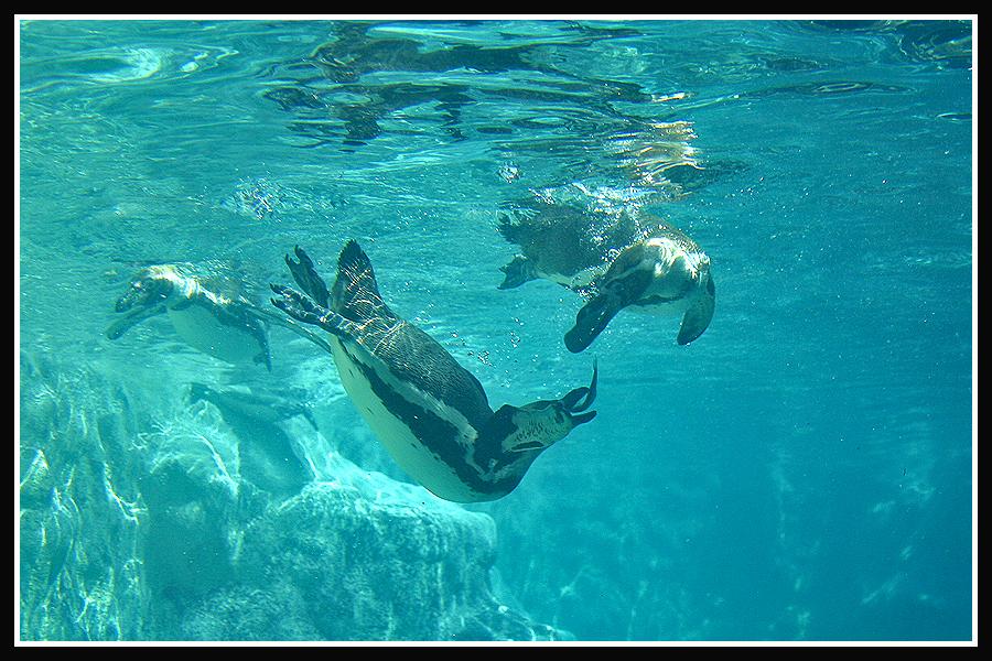 Underwater by jimbomp44