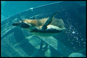 Fancy a swim by jimbomp44