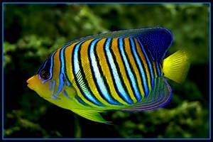 Tropical fish by jimbomp44