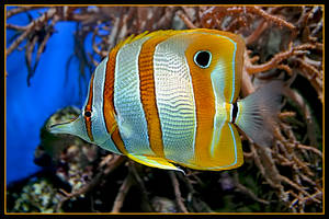 Tropical fish 1 by jimbomp44