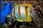 Tropical fish 1