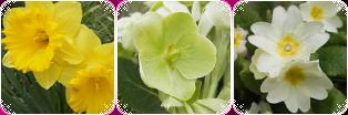 F2U Divider - Flowers by vvhiskers