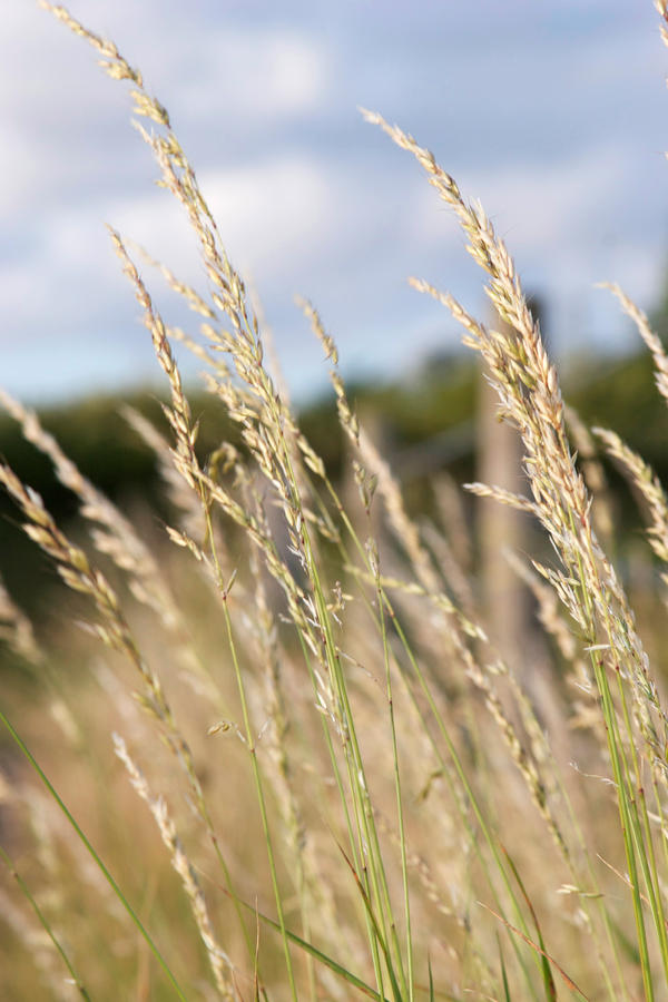 Long grass by gemma photography on deviantart for Like long grasses