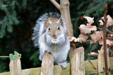 Squirrely Squirrel!