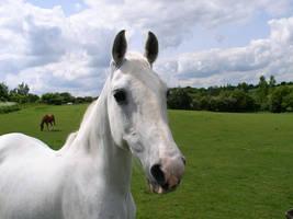 Horse by devnull-co-uk