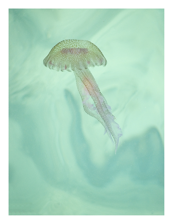 Jellyfish by pf1090