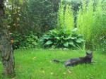 cat in the ''wild''