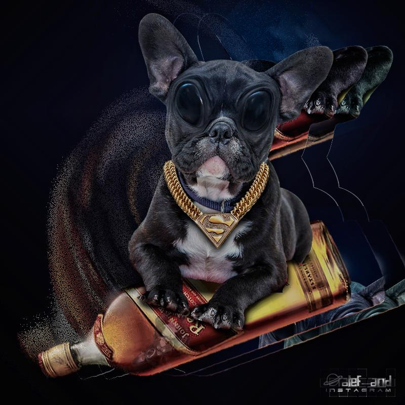 Dog-brabo by alefand