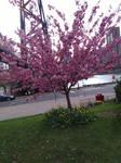Horray! Still more Blossoms