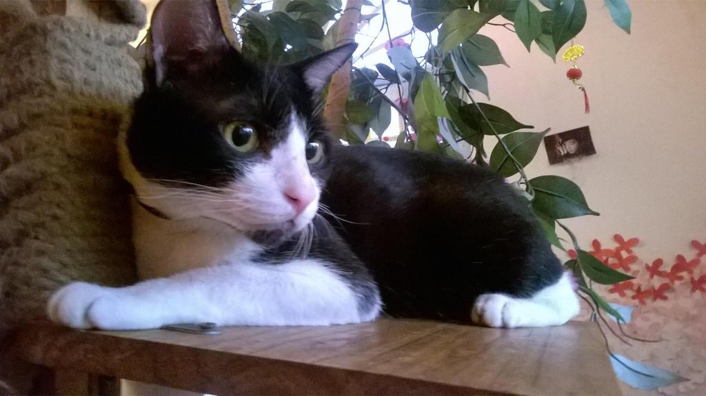 My cat by biofanVN