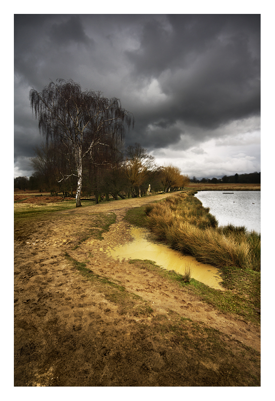 Richmond Park by Bartekkw