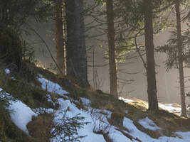 Forest stock III by Wylderness