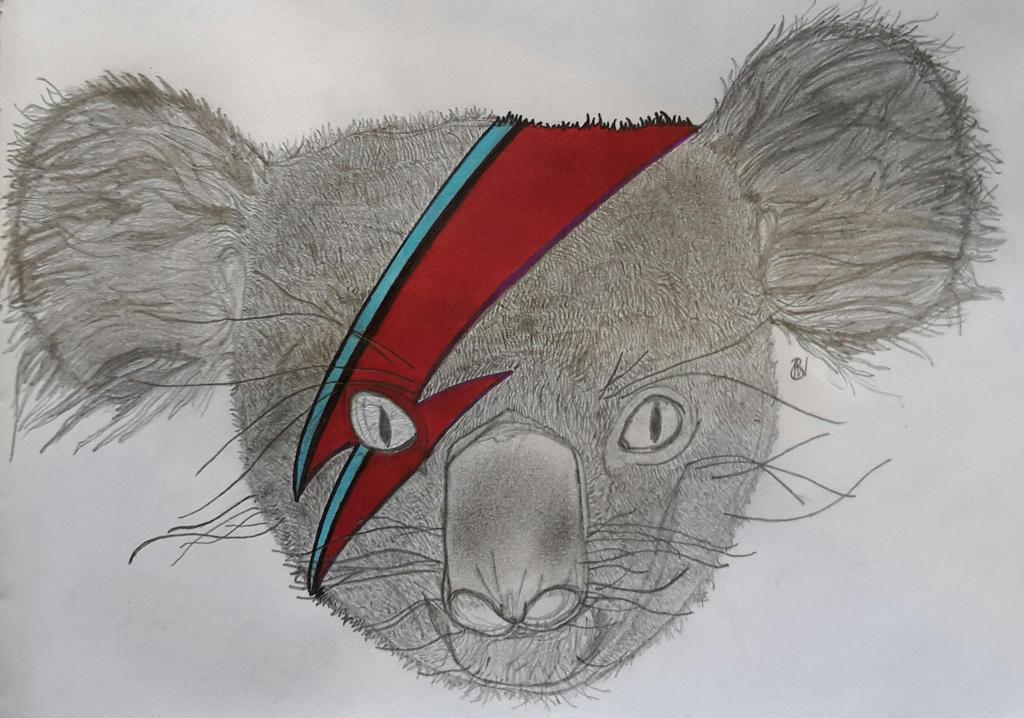 Ziggy Koala by DHopper71