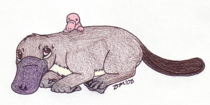 002. Platypus