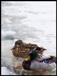 ducks on ice by Ricko270