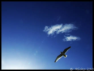 The seagull by Ricko270