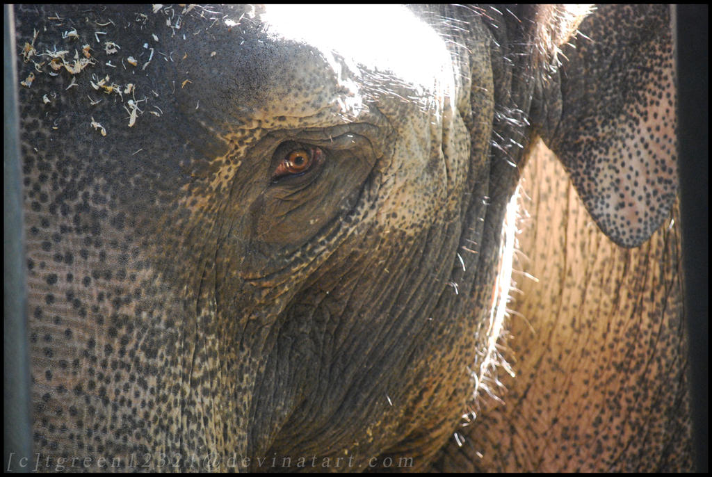 big elephant small world by cheetahspotts on deviantart