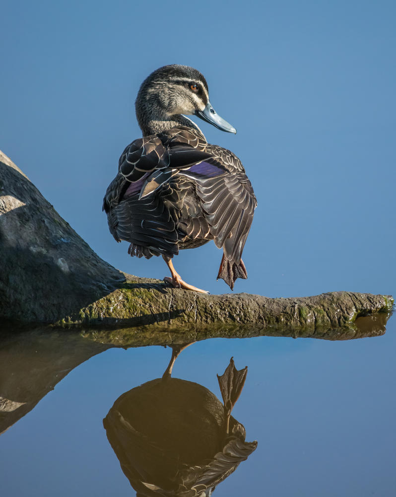 Posing on Glassy Water by mattboggs