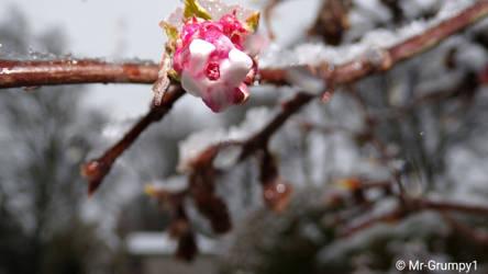 Pink macro-2018-01-23-18-16-18 by Mr-Grumpy1