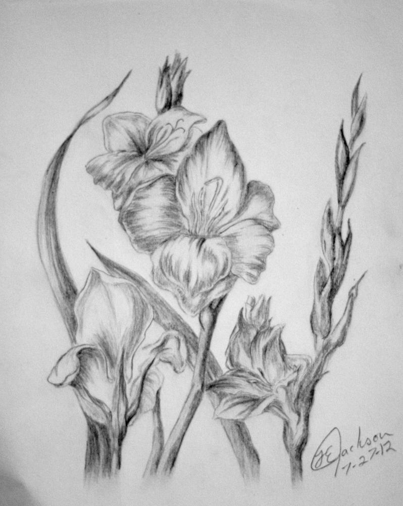 Gladiolus by Unique-Firecracker-4 on DeviantArt