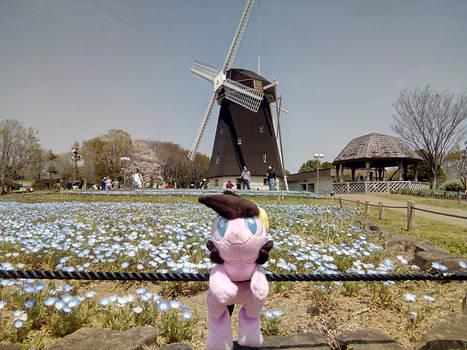 Cordy in Japan ~ Windmill, Osaka
