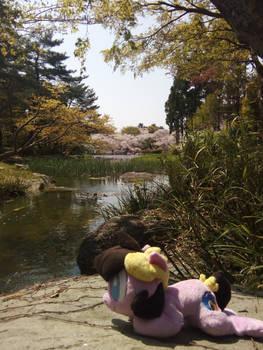 Cordy in Japan ~ Tsurumiryokucki, Osaka