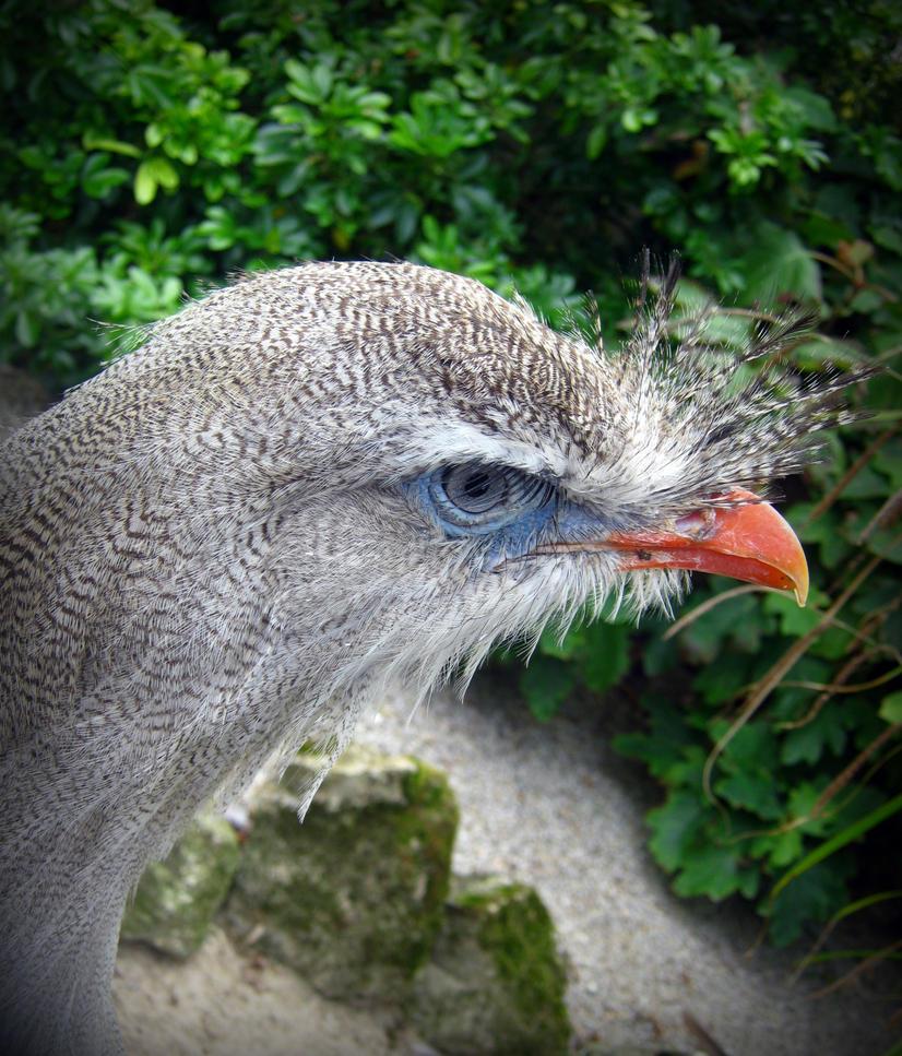 Cool Looking Bird by HarleyQuinn706 on DeviantArt