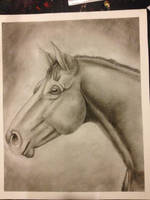 Charcoal horse headshot by CasablancaStudios