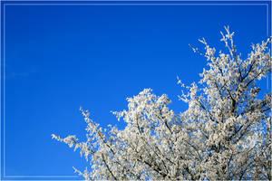 frosty blue sky by steeerne