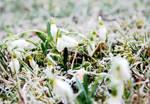 spring vs. winter