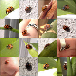 ladybirds.:o2 by steeerne