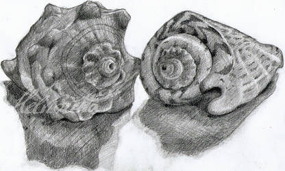 Some Shells by Helviriitta