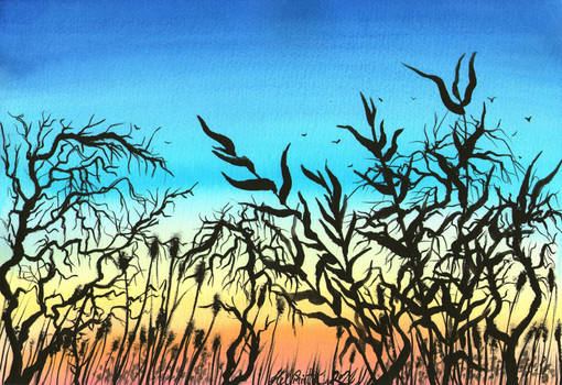 Swampy Sunset