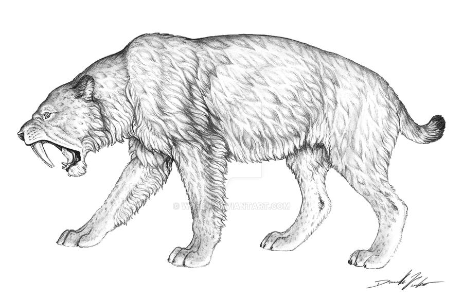 sabre tooth tiger coloring page - silodon saber tooth cat by wrelm on deviantart