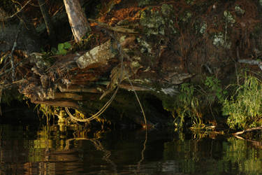 A Stump and Cable by EllriNidhogg