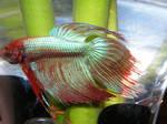 fish stock4