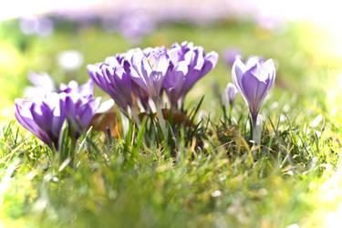 Spring by MrBeastmaster