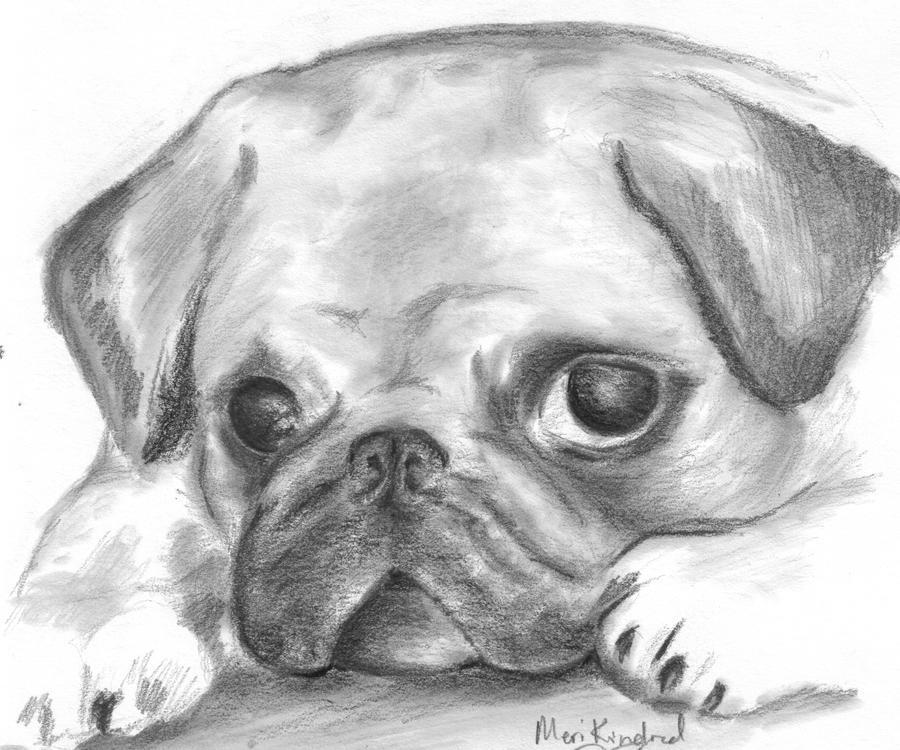Днем рождения, картинки для срисовки смешные собаки