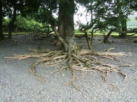 Tree roots by autumn-icestock