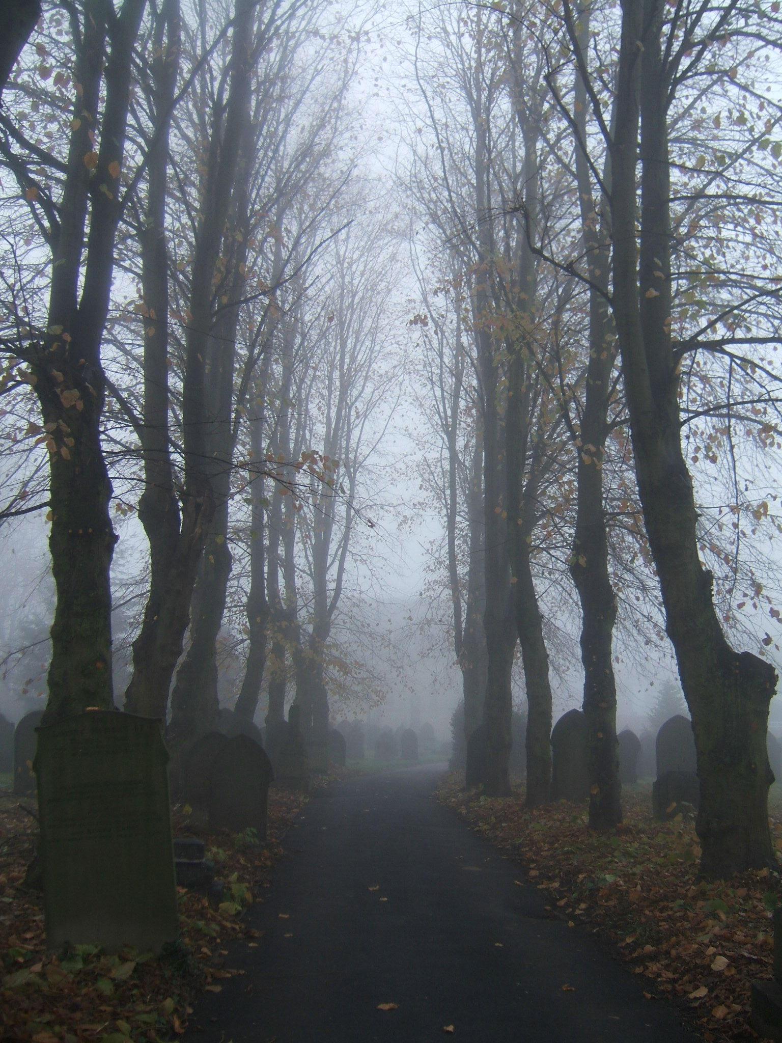 bookie graveyard by autumn-icestock