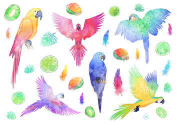 2017 - 05 - Tattoos parrots by Hervine