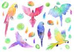 2017 - 05 - Tattoos parrots
