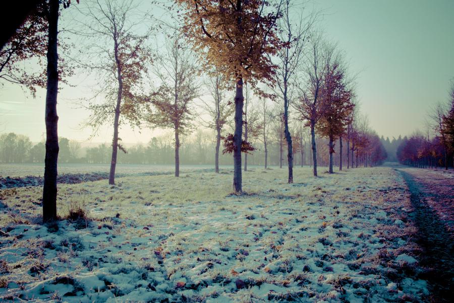 Winter forest by darkphotographe