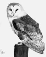 Barn Owl by diana-irimie