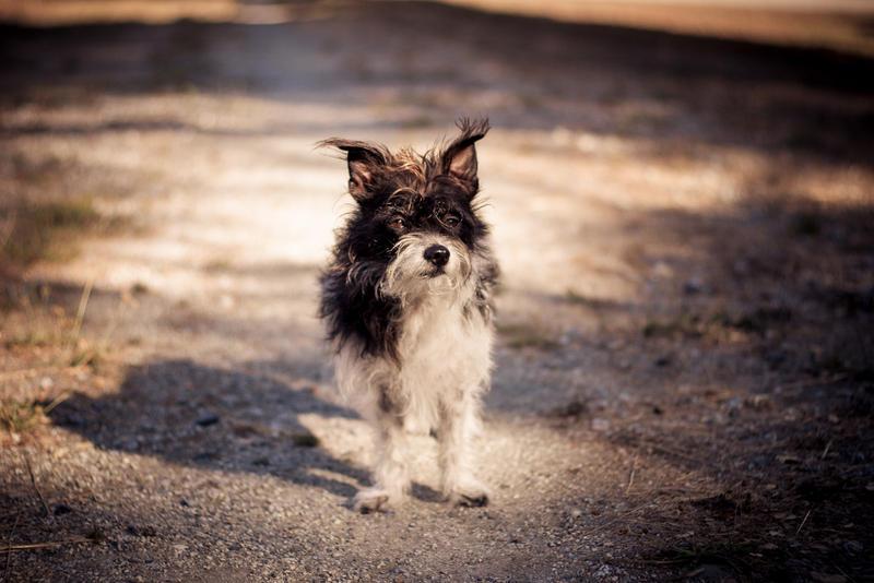 The Lone Ranger Dog by theflightoffancy