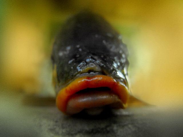 http://fc08.deviantart.net/fs71/f/2010/206/7/3/fish_lips_by_absurdityinflict.jpg